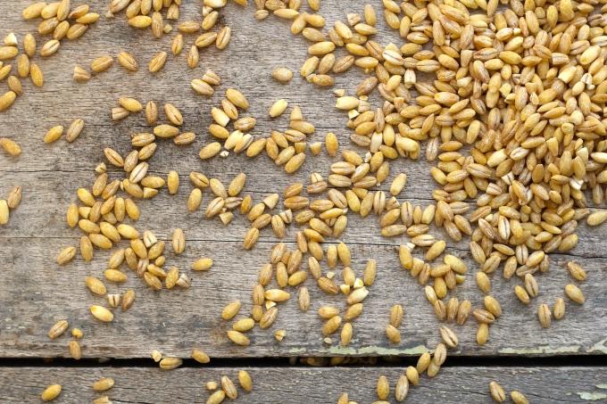 barley-bowl-barley
