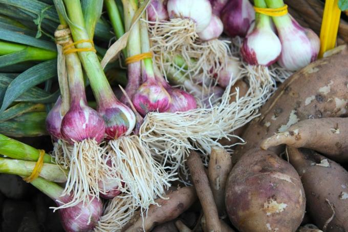 sydney-garlic