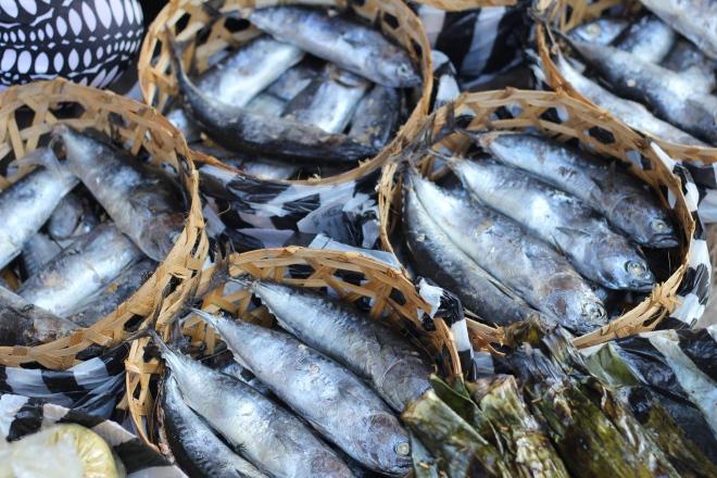 bali-fish