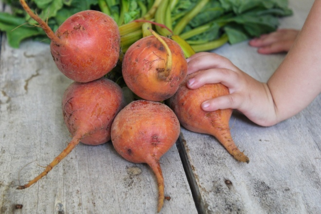 golden-beetroot