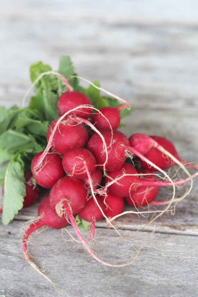 sprout-salad-radishes
