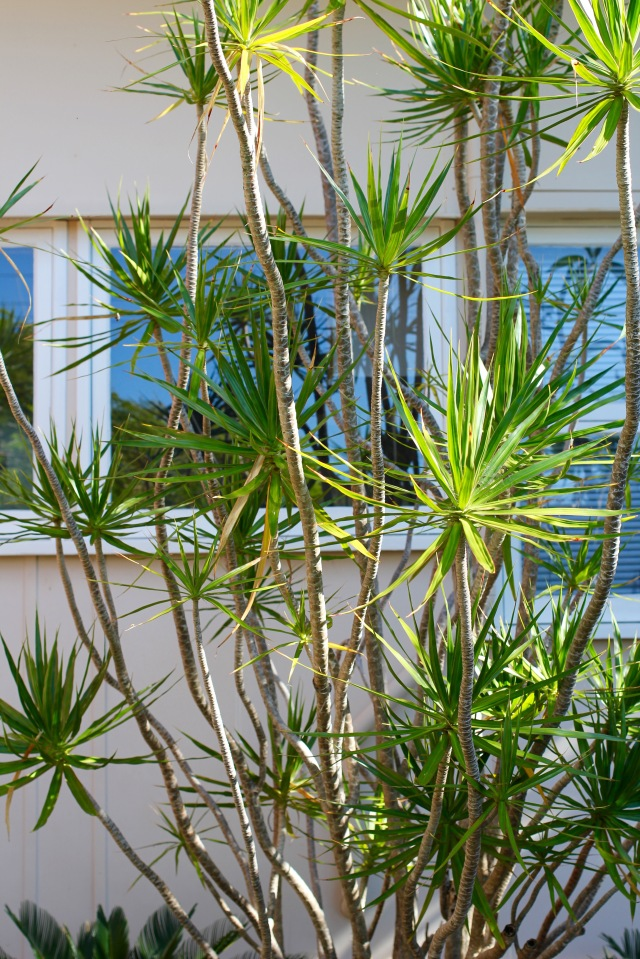 stradbroke-island-bushes